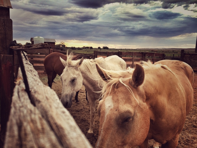 Horses Zeffler Photo
